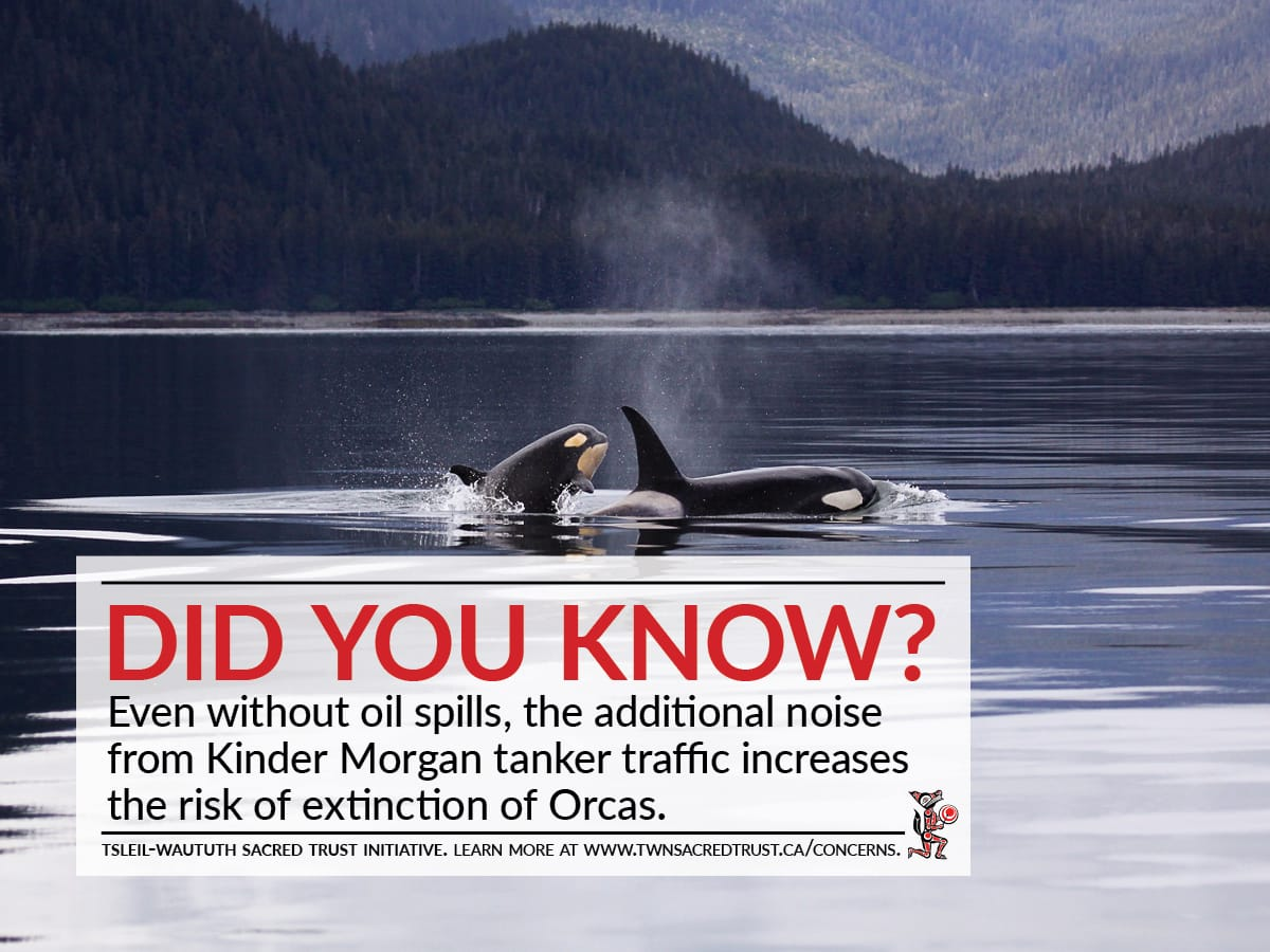 Did you know? Even without oil spills, the noise from increased Kinder Morgan tanker traffic increases the risk of extinction for orcas.